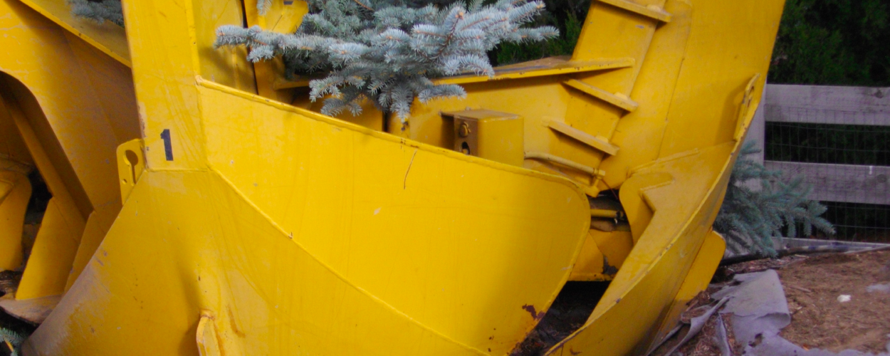 Tree Relocation Services Fort Collins CO
