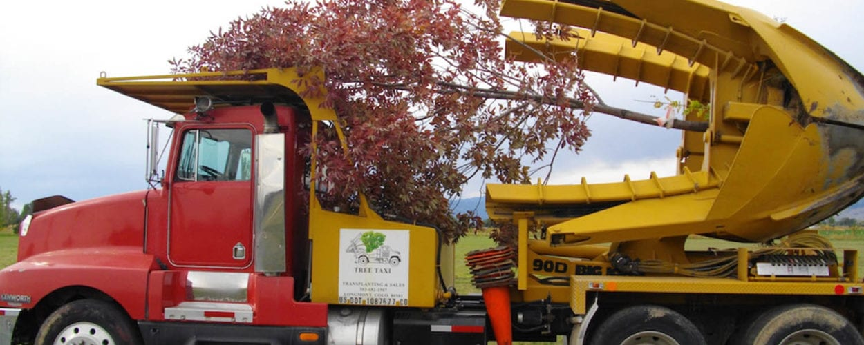 Tree Moving Company Boulder CO