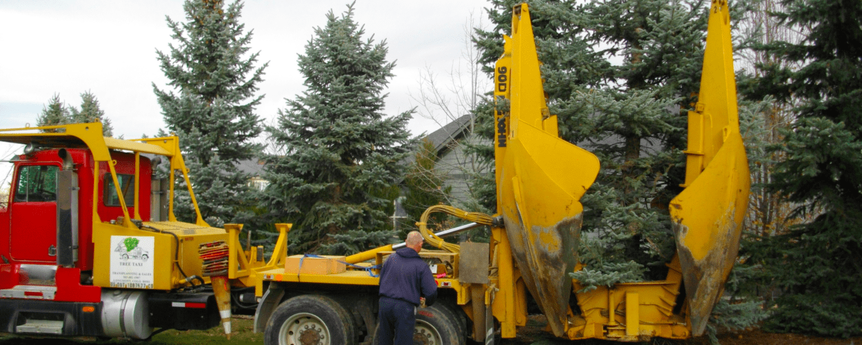 Tree Transplanting Longmont CO